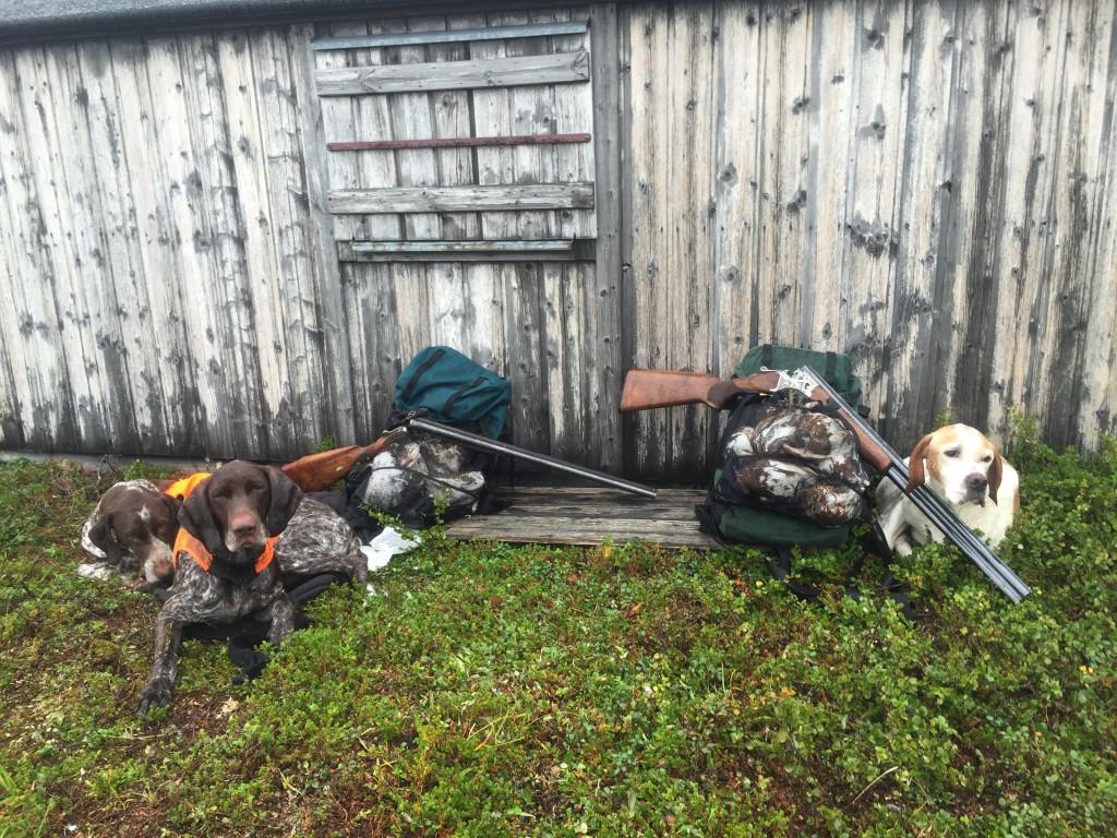 Trötta hundar efter en fantastisk jaktvecka