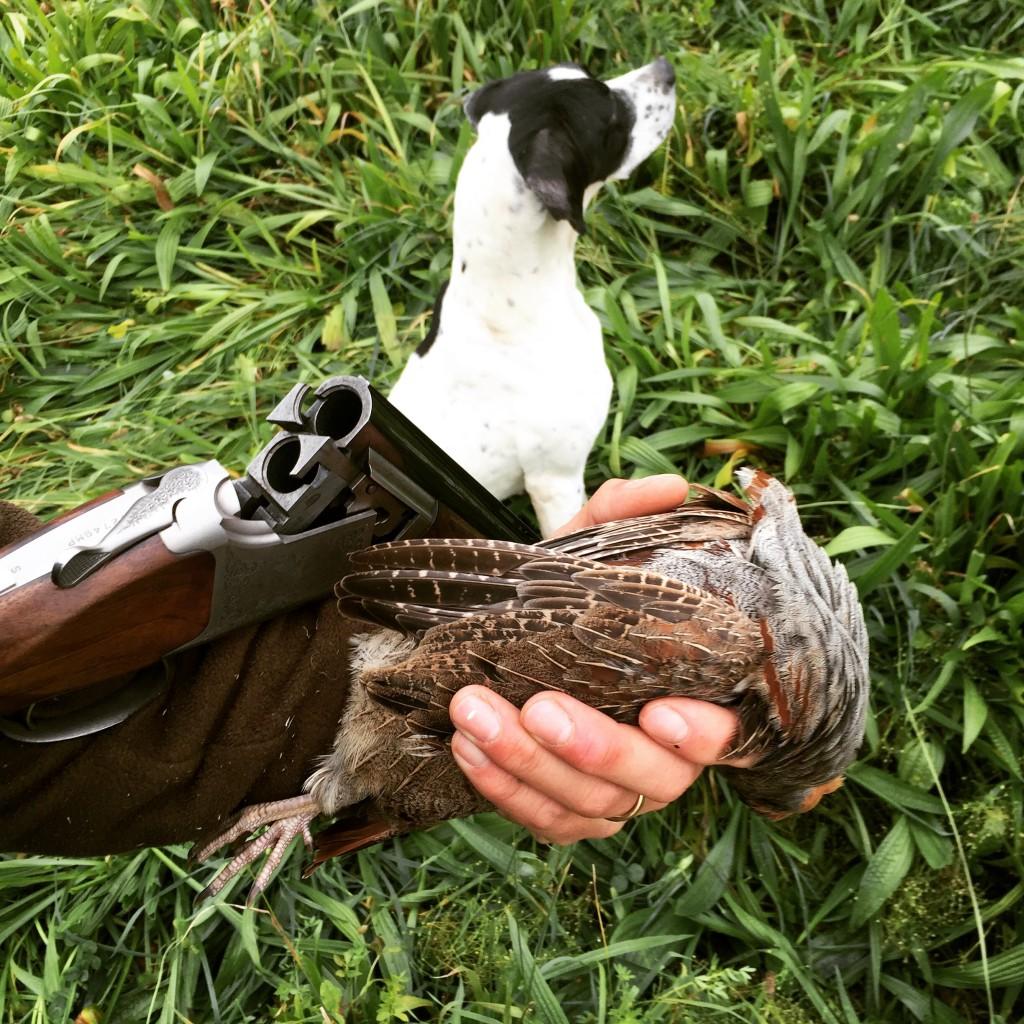 Hund, bössa och rapphöna efter Noras fina fågeltagning