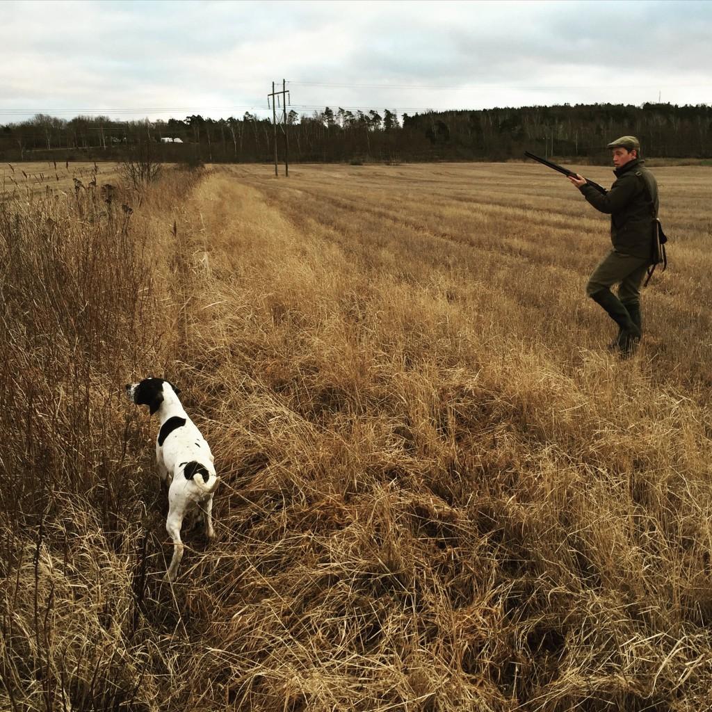 Nora står och mark är redo med berettatjugan - men nej, avancen bringade ännu en fasanhöna på vingarna. Hatten av!