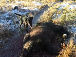 Gant med sitt första vildsvin