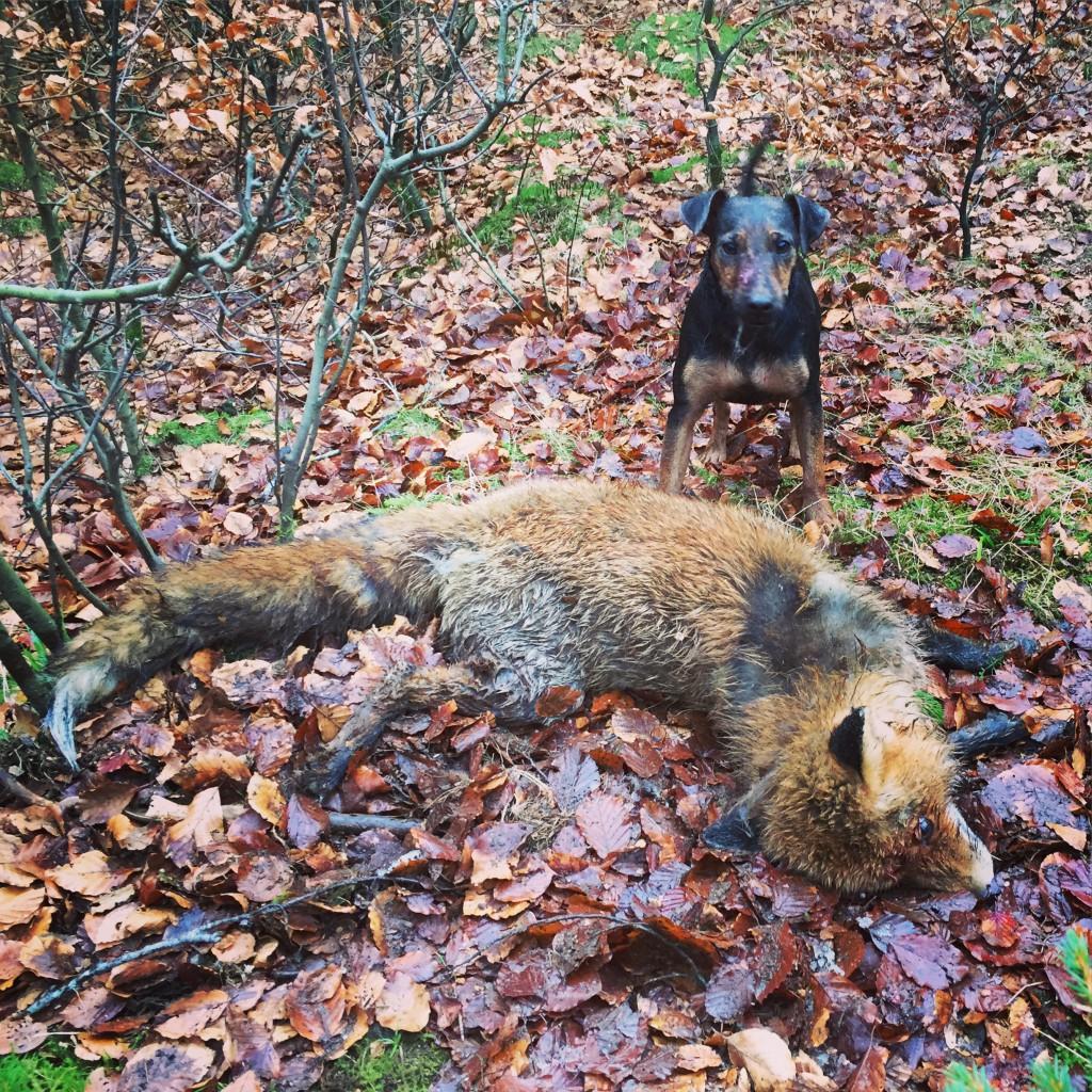 Diana med räven