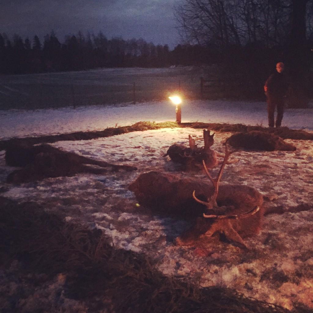 En vacker dag på slyngeljakt i Sörmland