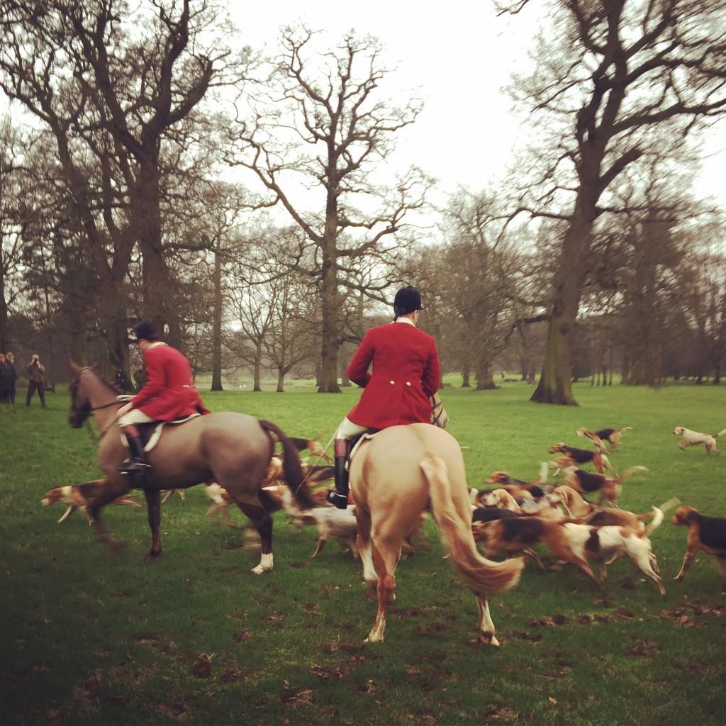 Det var imponerande att se hanteringaen av hästar och hundar