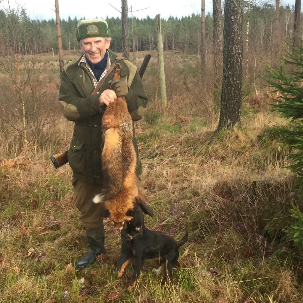 """Sten bärgar Gants """"jaktprovsräv"""" ur skogen"""